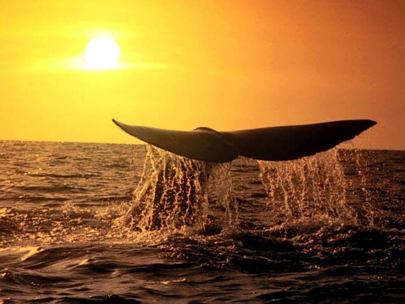 Balina 9,Balina resimleri, deniz canlıları...