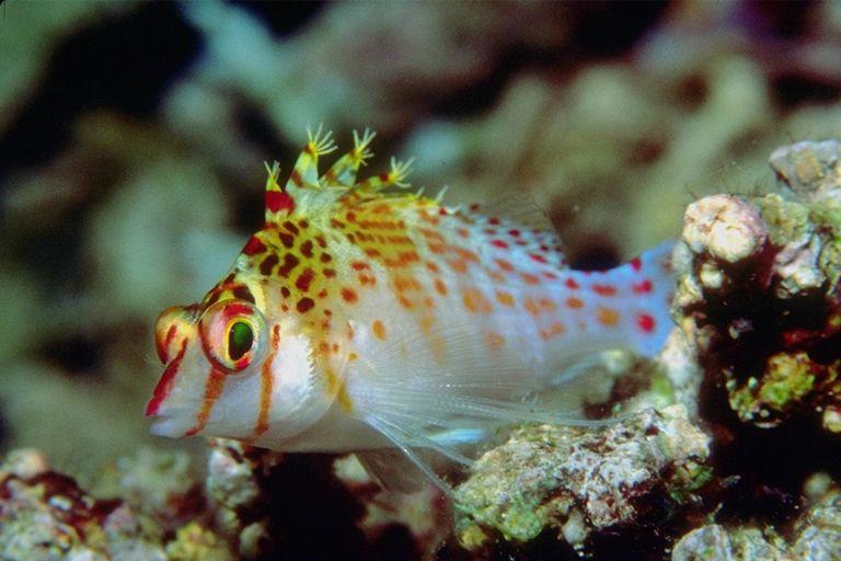 Denizdeki Yaşam,Deniz Canlıları,Denizaltı Resimleri