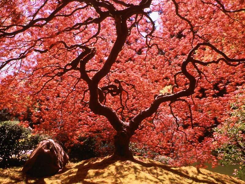 Ağaç Resimleri (1. Katalog)