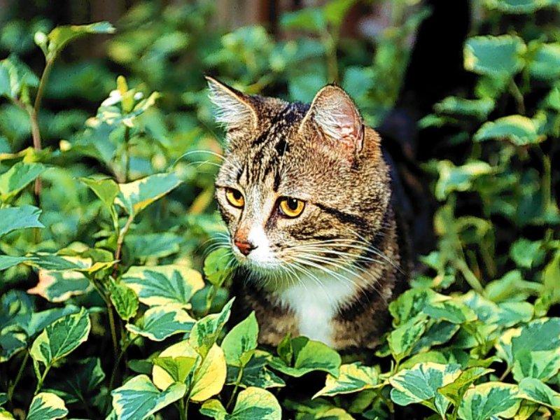 Sanatçılar en çok KEDİ sever - Kedi Resimleri (2. Katalog)