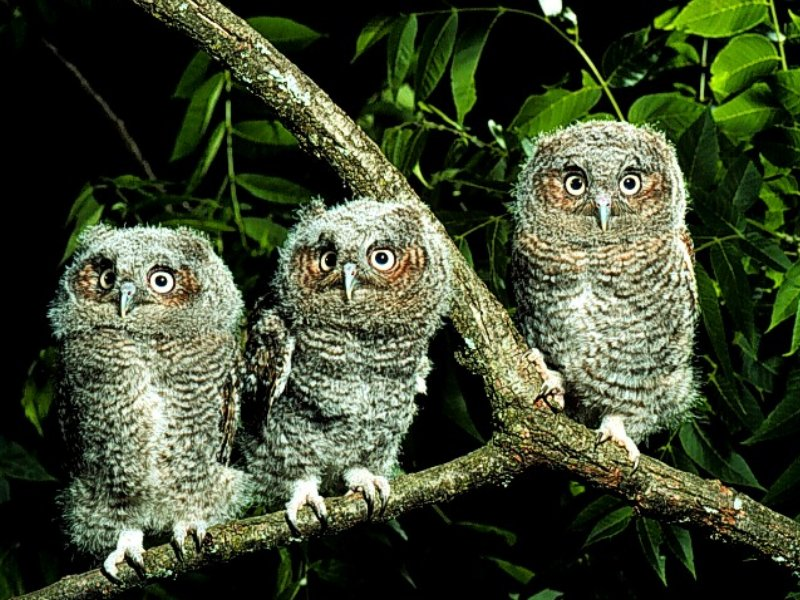Kuşların Gözleri - Kuş Resimleri (1. Katalog)