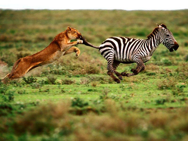 Yırtıcı hayvanlar